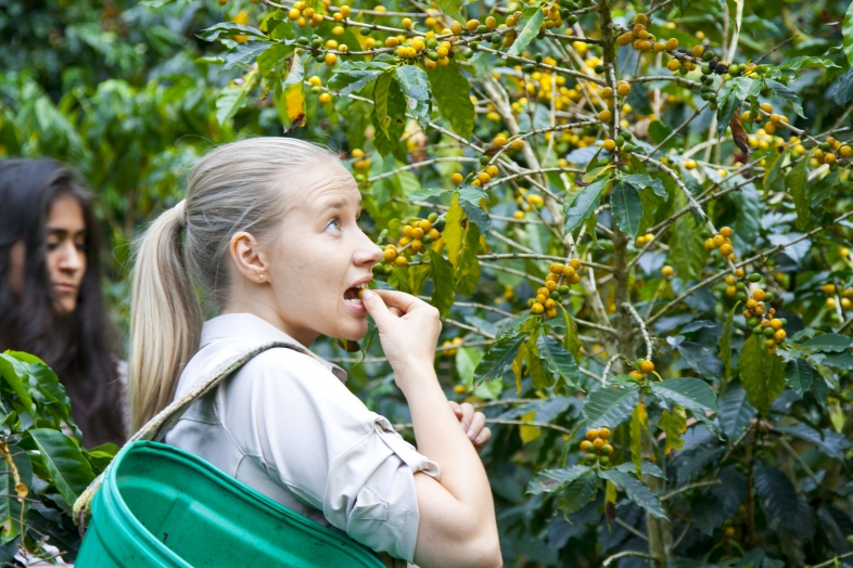 Anna Vänskä coffee cherries
