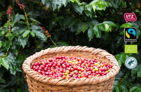 Raw coffee beans and certificates